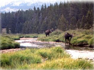 drop camps pack trips bighorns wy south fork lodge