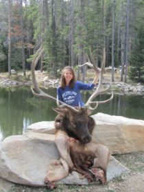 Holli's Elk South Fork Mountain Outfitters Wyoming