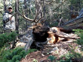 Wyoming elk hunts guided outfitters WY hunting